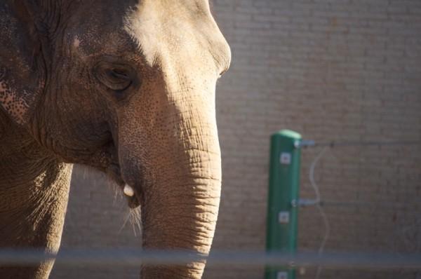 march-2011-thomas-knauer-sews-elephant