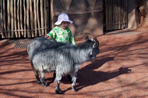 march-2011-thomas-knauer-sews-goat